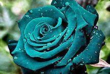 turkus kwiatu