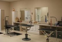 salão de banho e tosa