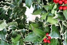 Christmas time / decorazioni e ricette natalizie