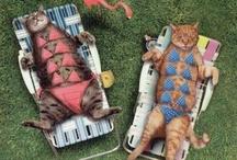 Funny furry friends / by Kristine Sobaski