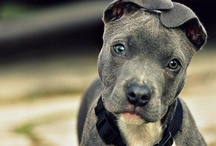 Pets N Animals  / by Nicole Burns