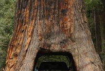 cherokee sequoia