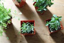 Plantas de interior / jardineria en maceta