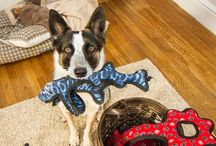 Fun Games To Play With Your Dog / Indoor exercise games for your pets when going outside isn't an option.