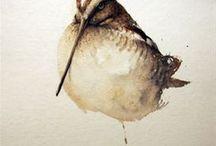 Fugler akvarell