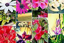 flowers plants garden