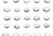 Anatomy - Nose