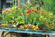 il giardino che vorrei