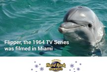 Television's Greatest Hits / Featuring tv's greatest hits over the years - especially those filmed around South Florida!
