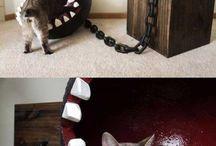 pelechy pre mačky