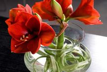 Planten bloemen