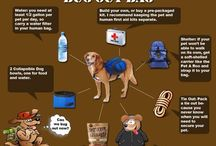 Pet Preparedness / Prepping for pets cannot be overlooked.
