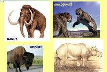 Ancient Animals