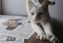 """Gatos y Gatas en Adopción. Protectora Huellas. / Porque todas y todos merecemos una segunda oportunidad. Porque los amigos/as no se compran. """"Gatos con"""" creamos este tablero con gat@s que puedes adoptar en diferentes protectoras. Encontrarás toda la información sobre el animal y la protectora en el enlace."""