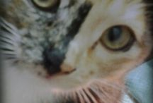 * ♥ For The Love Of CATS ♥ *