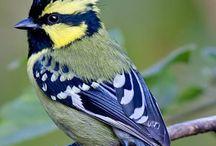 Proyecto Ilustraciones de Aves