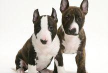 mini puppies