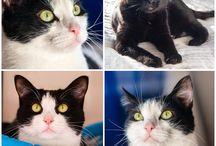 "My monochrome cat ""Мое монохромное котэ"""