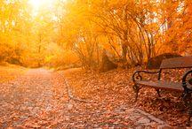 I <3 Autumn / <3 / by Jessica Hemingway