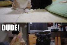 Kitteh! / Cat madness