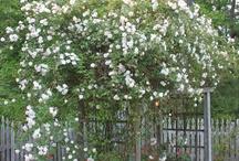Backyards & Blooms / by Susan Bush