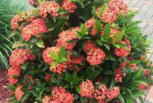 Exmouth Tolerant Plants