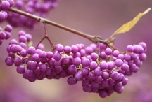 Best Flowering Shrubs ... / for your garden