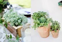 succulent tablescapes