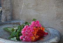 Kvety a záhrada