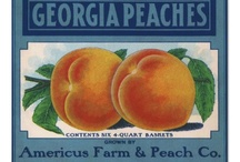 Peaches / by Georgia Barker
