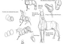 animais anatomia