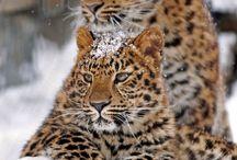 animals / by chris brooks