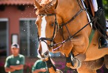 The Equestrian Life / by Nadia Taylor