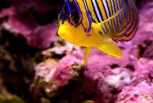 peixes aquaticos