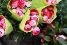 Fleur / by Carol Gillott