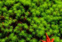 02 「植物の造形」