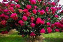 nombre de arbustos y flores extraños