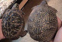 Garden: Turtle