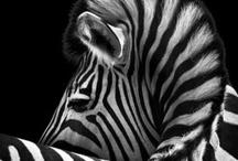 Animal Photos I like
