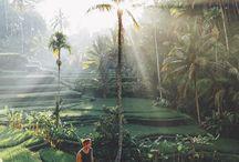 Tropical Mood...
