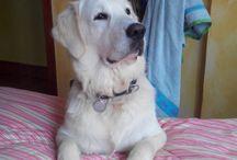 Mi peludo Casper / Mi compañero de camino