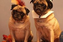 """Petsgiving / Celebrate """"Petsgiving"""" by showing your pets how thankful you are for them this Thanksgiving season!"""
