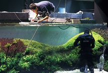 nature aquarium