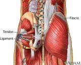 Health: Fibromyalgia/Chronic Fatigue