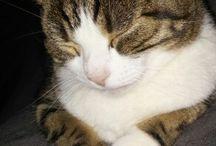Katzen / Unsere Räuber
