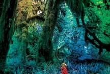 MORADO - The Forest