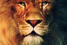 Lion of the Tribe of Judah (Revelations 5:5)