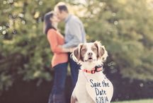 Pet-Friendly Weddings / When including your whole family in your wedding means the four-legged, too! The best, most creative ideas for getting your dog, cat, and even horses involved in your big day!