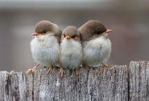 Bird's the Word / by Melanie Moon