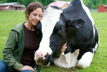 Vegan / Animal Rights